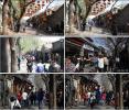 北京南锣鼓巷街景 实拍视频