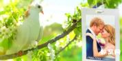 ae模板实拍春天梨花春叶 树梢 唯美婚礼相册素材树悬挂照片
