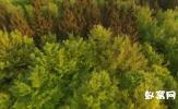 航拍 实拍绿色森林 原始森林