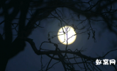 实拍月亮升起03 实拍视频 月亮 明月 唯美 大气 特写 月亮视