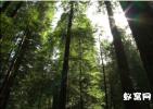 深入丛林系列视频素材原始森林 实拍视频素材