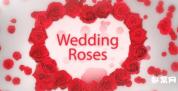 AE模板-玫瑰花桃心效果相册 婚礼电子相册 婚礼视频MV
