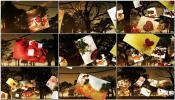 夕阳下森林草原夜幕降临悬挂照片树 Photo Tree相册AE模板