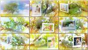 AE模板实拍+后期鸽子树婚礼梦幻电子相册视频制作