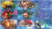 新年圣诞节庆祝视频开场AE模板片头