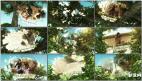 天空三维魔法树视频相册投影唯美树下图文相片展示涂鸦AE