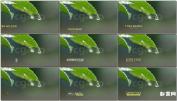 简洁屏幕底部字幕条动画设计模板角标字幕AE模板最新模板