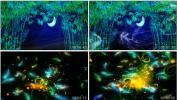 月光下的凤尾竹唯美月色竹林羽毛孔雀LED大屏幕视频素材 晚