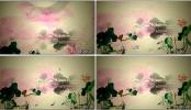 江南水乡蝴蝶花瓣中国风唯美古典 荷花水墨江南 视频素材