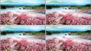 世外桃园 桃花 花田 晚会活动婚礼酒吧LED大屏背景视频素材