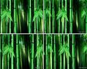竹子 竹林 LED视频 背景素材