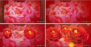红红火火 富贵花开盛世牡丹 喜庆春晚晚会大红中国风LED视频