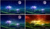 夜景变黎明 中秋节月亮茶园茉莉花唯美蝴蝶粒子花瓣飘落视