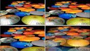 雨巷油纸伞 中国风LED 雨伞舞 婚礼活动晚会节目LED视频素材