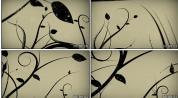 花藤黑 中国风水墨 花纹生长 视频素材