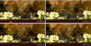 戏曲联唱 黄梅戏 京剧戏曲 中国风晚会中式婚礼LED荷花视频