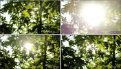 实拍明媚阳光穿过树叶 夏天 清新树叶 视频素材