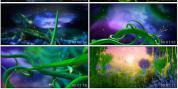 逆境成长 大树生长 成长励志向上视频素材
