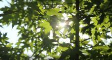 sp1 树间阳光高清实拍视频素材
