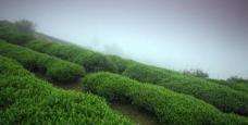 sp2实拍 茶山自然风光 视频素材