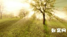 sp11阳光射线树木光束照射大自然高清视频拍摄