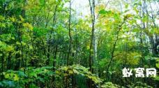 SP12 茂盛树木自然景象镜头高清视频实拍