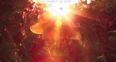 梦幻的莫奈秘密花园自然风光高清实拍视频素免费下载
