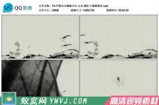 T9.中国风水墨画文化 山水 画虾子高清视频素材